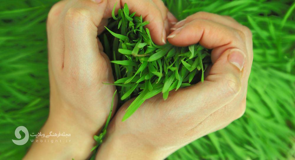 سبزه سبزم، ریشه دارم؛ درباره رسم سبزه انداختن